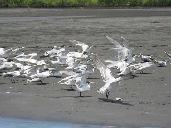 cungur beach